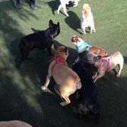 The South Bay French Bulldog Meetup Group