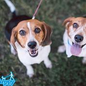 San Jose BarkHappy Dog Meetup