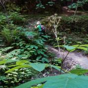 San Jose Mid-Week Hikers Group