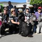 Oodles of Standard Poodles Play Group & Social