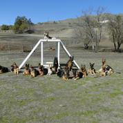 German Shepherds of the Bay Area
