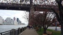 Roosevelt Island Riverwalk, Masks + Social Distancing Required