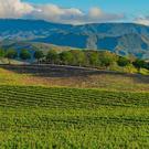 Sonoma County Women's Wine Club