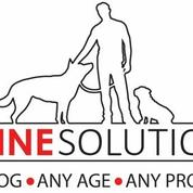K-Nine Solutions Training and Pack Walks