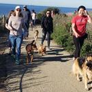 South Bay Fearful & Reactive Dog Socialization Group