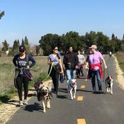 Elk Grove Dog Walks Meetup