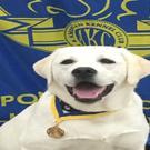 Intuitive Dog Training