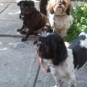 Ventura Area Playful Small & Medium Doggies 4 Fun Times