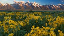 Free Zoom Meeting: Improve your Landscape Photography