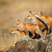 The Nature Photography Group of the Central Coast of CA