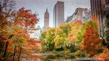 Capturing Extraordinary Fall Photography: South Central Park