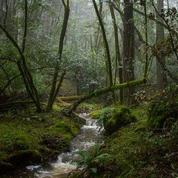 Hiking in Marin: Mountains, Meadows, Marshes and Mist