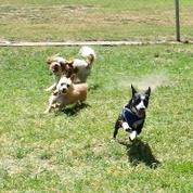 Learn & Play Small Dog Socials - Hosted by Tiny Paws Fresno