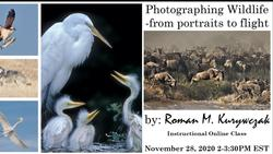 Photographing Wildlife-from portraits to flight