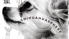 CHIHUAHUA CHIT CHAT [SUMMER EDITION]