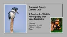 A Passion for Wildlife Photography with Irene Sacilotto