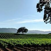 Wine Country Social Club (ORIGINAL) NOT ADDING MEMBERS