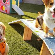 Puppy Dog Socials !!!