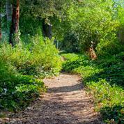 Women's Walking Meditation in Los Gatos
