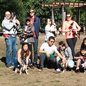 The San Francisco Boston Terrier Meetup Group