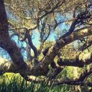 Find Your Path: Somatic Transformation and Healing