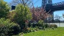 Sunday East River Run