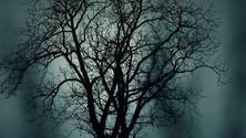 ONLINE: Intermediate Dark Magic with Spirits & Energy