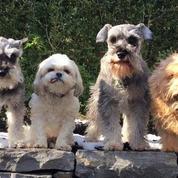 Little Doggy Social