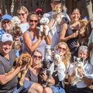 Menlo Park VERY Small Dogs/Puppies Social