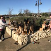 German Shepherds Of The South Bay Area