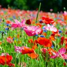 Wildflowers Positive Affirmations for Women Meetup Group