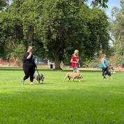 Code Red K9 Crew Group Training Classes & Pack Walks